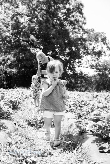 Strawberry picking sneaks